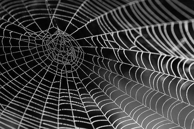 Une araignée tactile